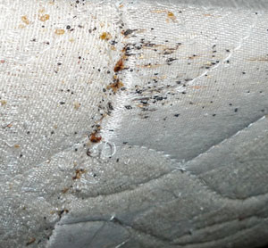 Bed Bug Control Miramar Pest Removal Call Now